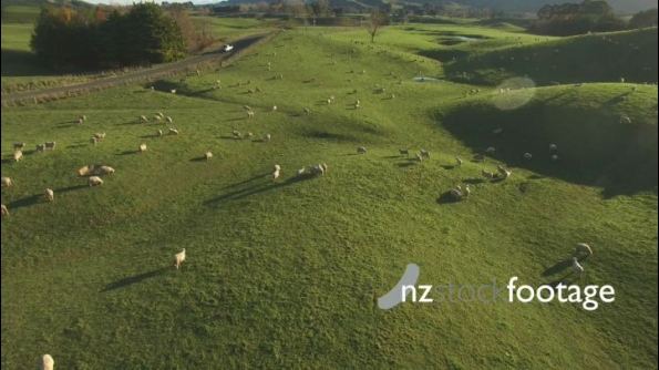 Sheep in Field And Ute HD 24885