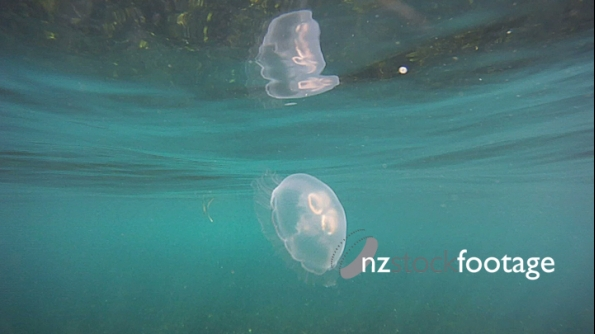 Floating Jellyfish 3D 3933