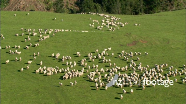 Sheep Flock 2 Aerial 24849