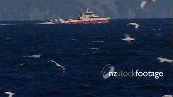 Auckland Gannets and Fishing Boat, Aerial 2614