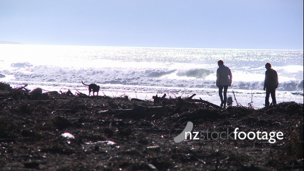 Walking Dogs at Beach 2876