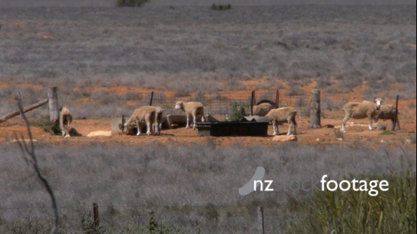 Outback Farm and Sheep Australia 2 3759