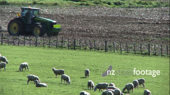 Sheep & Tractor 2 1591