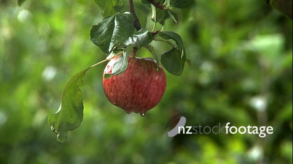 Apple to Cobweb 1 572