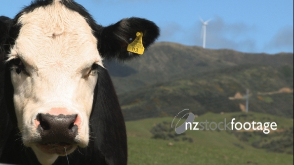 Wind Farm and Cow 5 1347