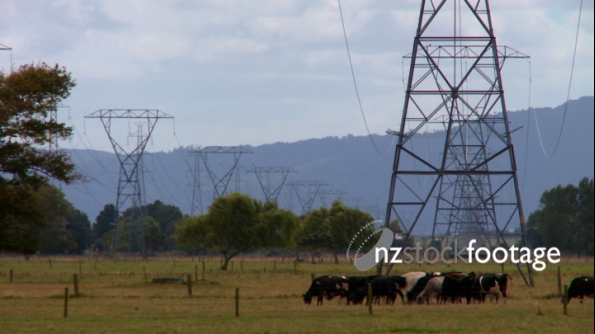 Power Lines & Dairy Cows 2 1180