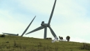 Sheep and Wind Turbines 3099