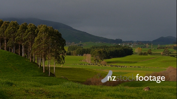 Waikato Farmland Valley  1 4300
