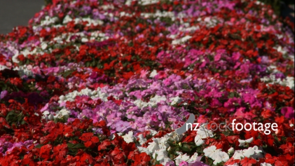 Flowers Bed 1 1201