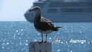 Seagull And Ship 2 803