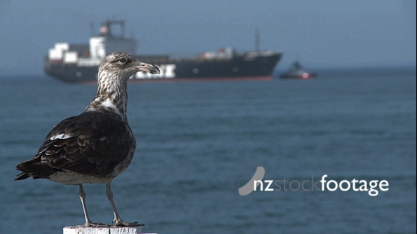 Seagull And Cargo Ship 3 804