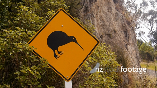 Kiwi Warning Road Sign 1 4649