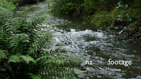 Dog Stream Ferns 1 3664
