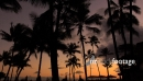 Sunset with Palms in Waikiki, Honolulu, Hawaii 2647