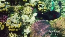 Marine Life With Fish And Corals In Red Sea 13105
