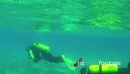 People Diving As Scuba Divers Swimming Underwater In Red Sea 13109