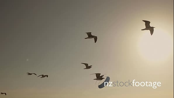 Seagulls And Birds Flying In Sky At Sunset In Super Slow Motion 13997
