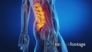 walk scan Man in motion focused on spine 2 14287