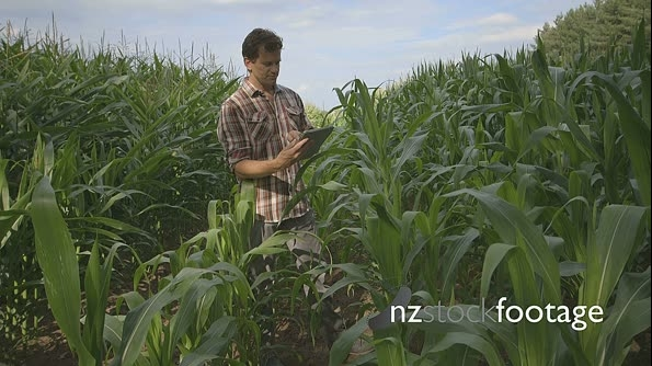 Man using digital digital tablet in field 16833