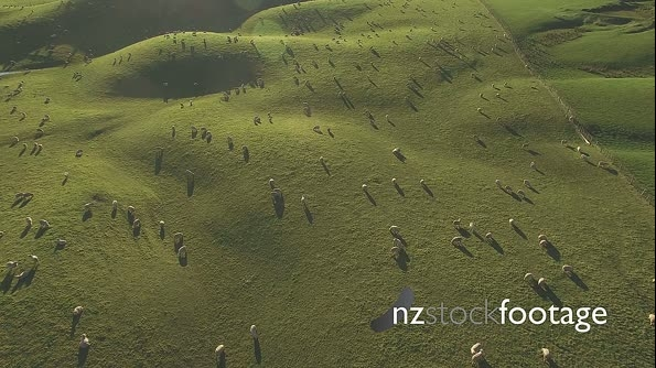 Sheep from air HD 18464