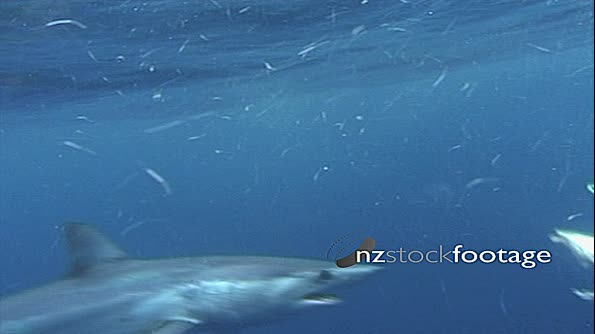 Shark Feeding Frenzy 2 18520