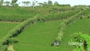 Coffee Plantation Cultivation Agriculture Farming Field Hills 18527