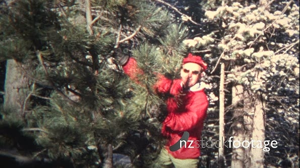 (8mm Vintage) 1965 Xmas Tree Chop Your Own Montage 19499