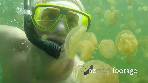 Diver Swimming In Jellyfish Lake Palau Micronesia Pacific Ocean Water 20969