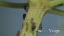 Macro Of Ants And Vine Lice On Leafs 21467