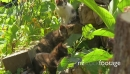 Beautiful and sweet kittens, playing together 21478