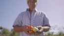 14-Portrait Man Farmer Smiling And Showing Tomatoes To Camera 23711