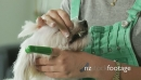 6-Dog Owner Cleaning Pet Teeth With Toothbrush Toothpaste 25601