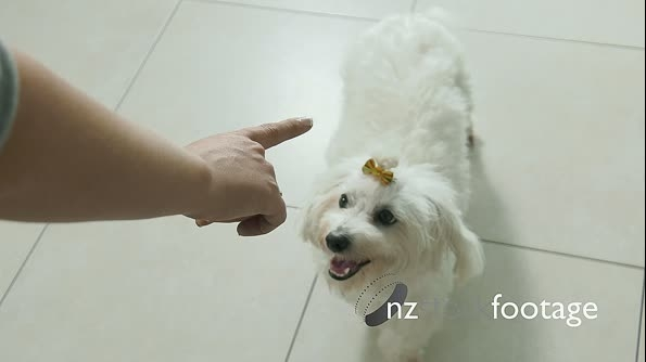 7-Woman Dog Owner Training Pet To Sit And Wait 25657