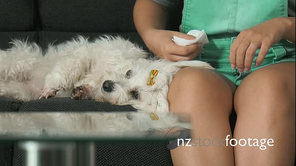 17-Woman Pet Owner Cleaning Ear To Small White Dog 25669