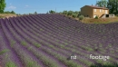 French Countryside House Near Lavender Field In Provence Southern France 25750