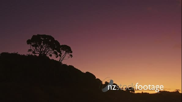 silhouette of pohutukawa tree at sunset, New Zealand 26717