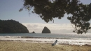 relaxing tropical beach, New Chums, Coromandel Peninsula, New Zealand 26806