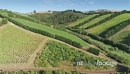 Aerial flying over a vineyard on waiheke island, Auckland, New Zealand 27010