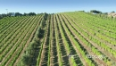 Aerial flying over a vineyard on waiheke island, Auckland, New Zealand 27033