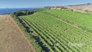 Aerial flying over a vineyard on waiheke island, Auckland, New Zealand 27042