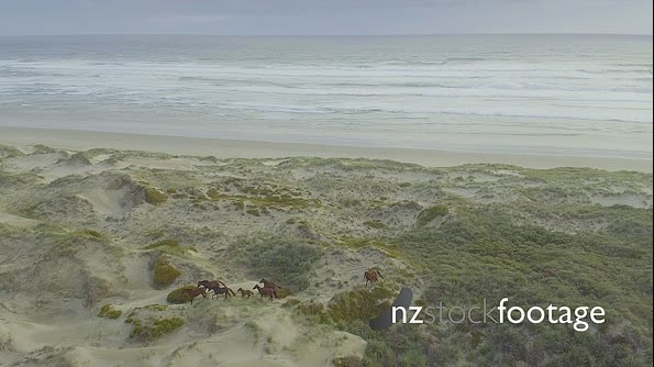 Aerial of herd of wild horses running on a sandy beach in northland, new zealand 27153