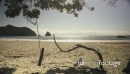 tree rope swing on tropical beach, New Chums, Coromandel Peninsula, New Zealand 27527