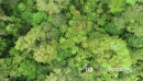 Top down aerial view over rain forest 1 28258