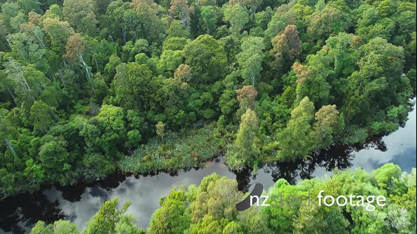 Top down aerial view over rain forest and stream 28265