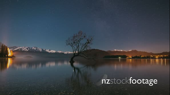 Wanaka Tree at Night 4k Timelapse 29064