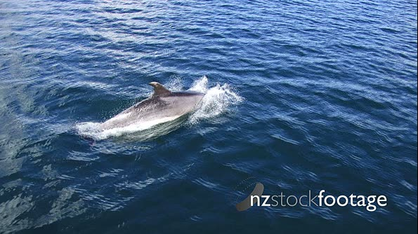 Dolphins 1 291