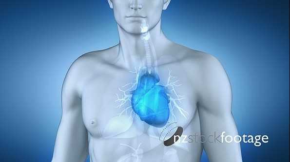 Mans Heart 3D Animation  5684