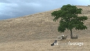Sheep Under Shade Tree 2 610